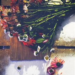interesting flowerarrangement photography flowers life