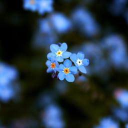 flowerarrangement flower colorful photography nature wppfloralcanvas