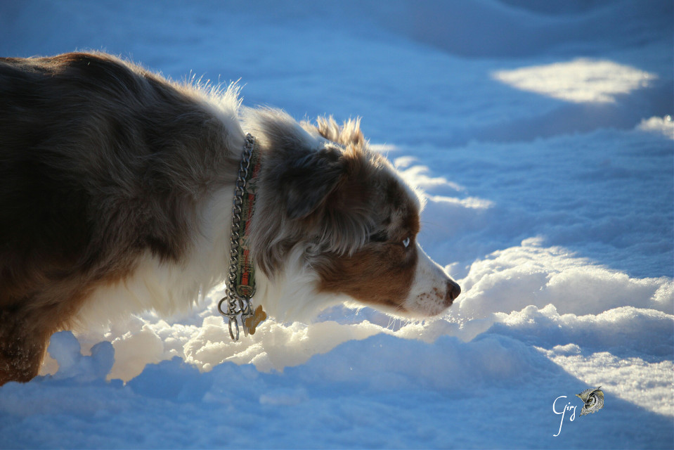 Have a good time !  #dog  #petsandanimals  #winter #shadow