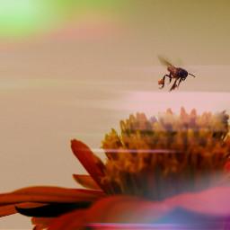 how photography macro love colorsplash