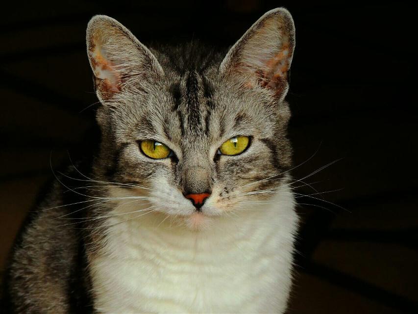 """""""Wo warst du? Du riechst nach Hund!""""     #Katze #cat #photography #Fotografie #emotions  #Futzi"""