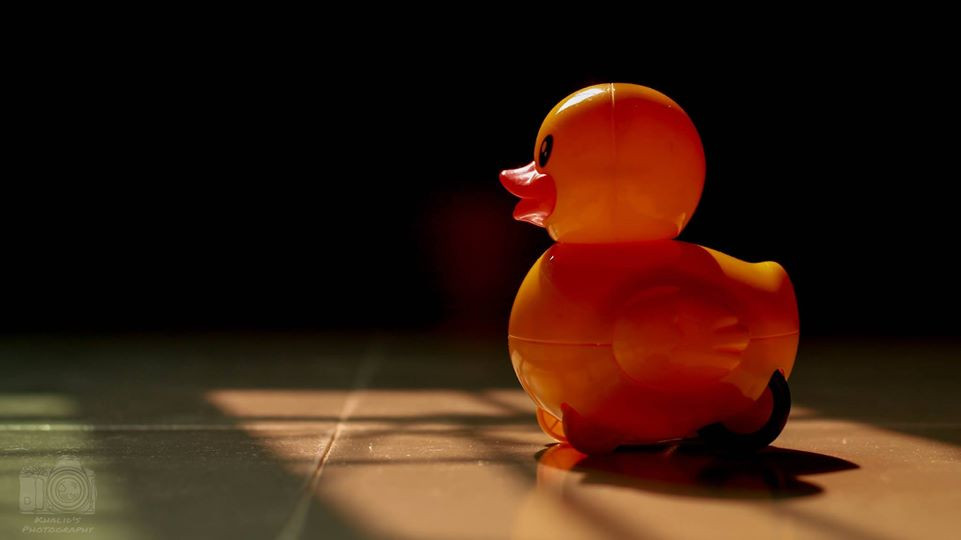 The Large Duckling  #photography
