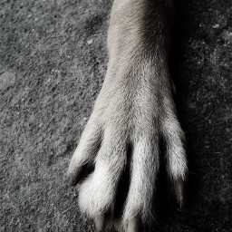petsandanimals animals dog footprints