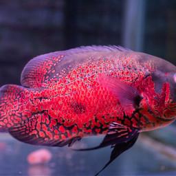 fish pet animals water cute