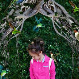 bird love photography cute nature