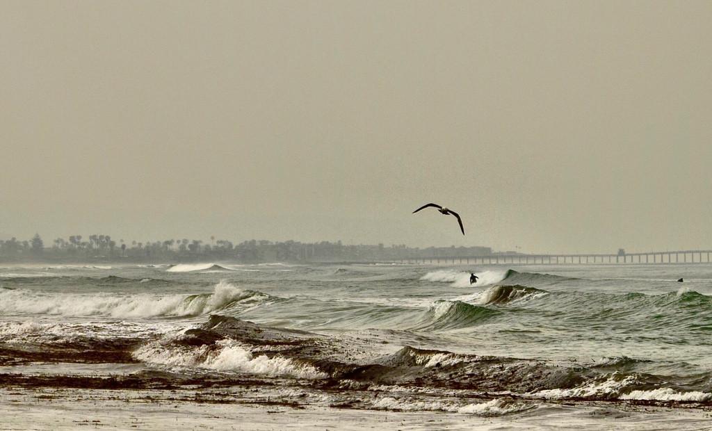 Surfers and Seagulls #landscape#nature#seagull #surfer#freetoedit