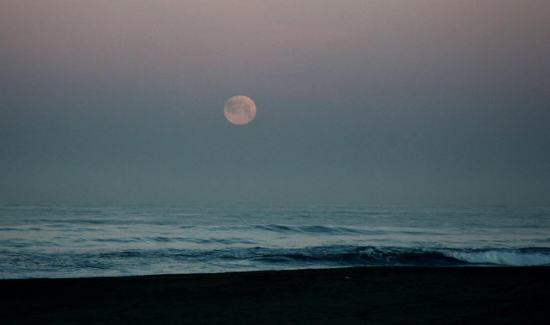 #moonsetting #photography  #predawn #newportbeach