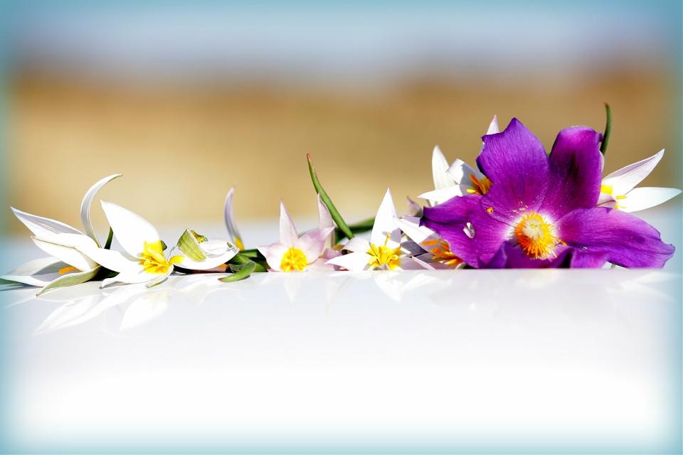 #flower #photography #Beautiful #nature