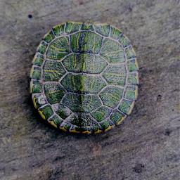 turtle wood green vibrant
