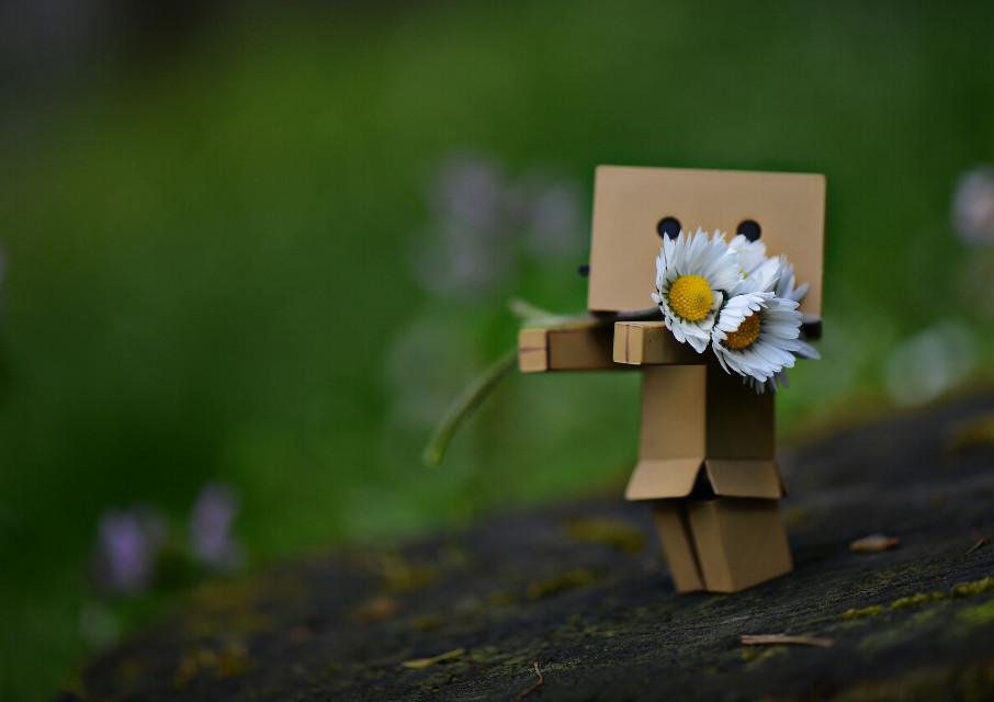 Sevmek güzel şey efendim..  Ama yanılmak..  Bi o kadar acı...   #toys  #daisy  #cute  #love  #flower  #emotion