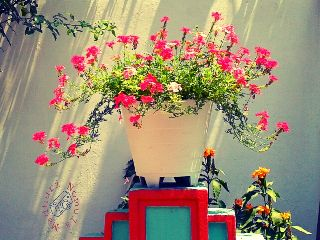 photography nature flower colorful houseplants
