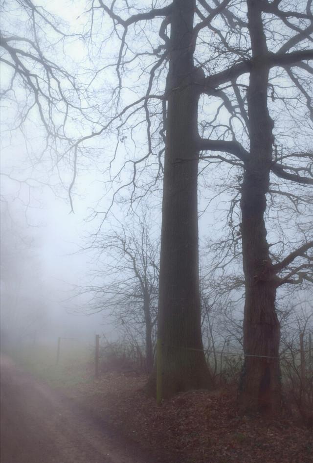 #photography #park  #mist  #forest  #foog  #nature  #lovenature #lovetrees  #trees