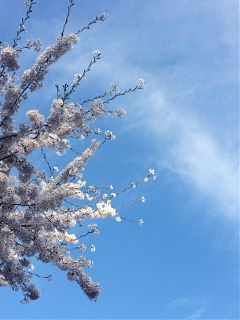 beautiful spring white flower blue wppflowers freetoedit