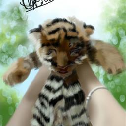 wdpzooanimals tiger baby petsandanimals cute