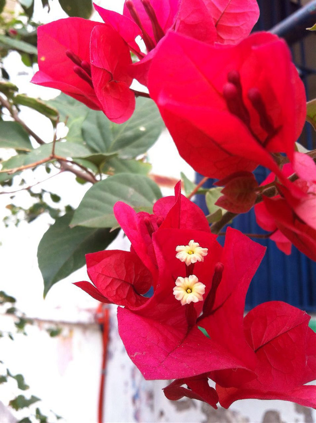 #Flower  #Nature  #Beautiful  #Red