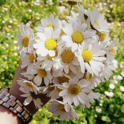freetoedit flower summer nature photography