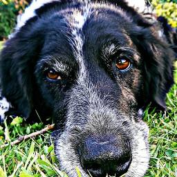photographybyme oldphoto lastsummer dog animal