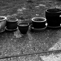 flowerpots spring black water interesting