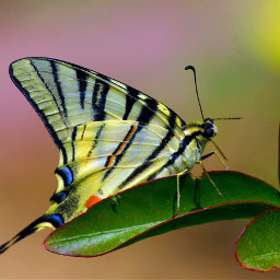 buterfly canon canon1100d beautiful perfect