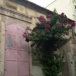 pink window flower
