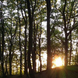 wpptrees nofilter noedit nature trees