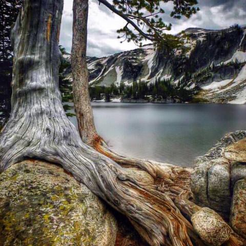 #wppvacation,#beautiful,#nature,#trees,#landscape