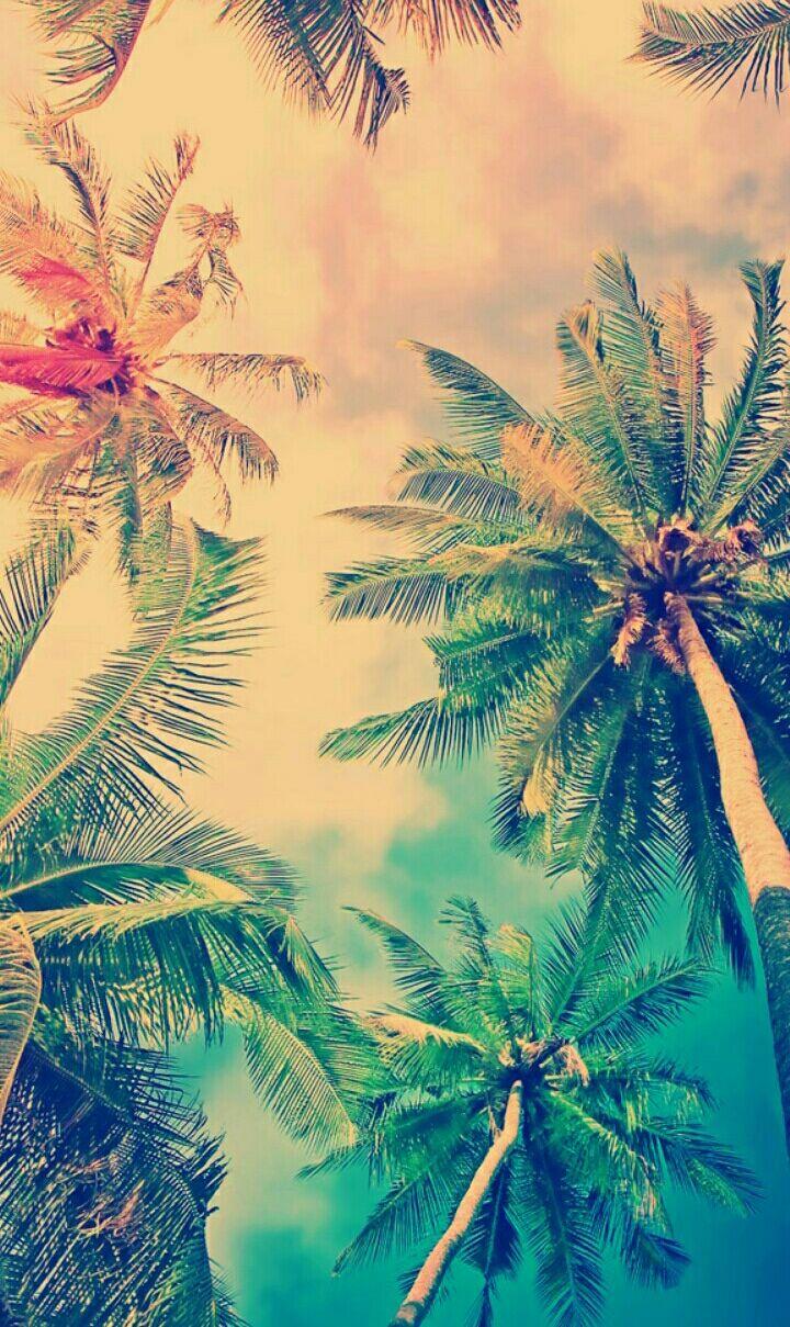 wpptrees colorsplash colorful trees beach summer ...
