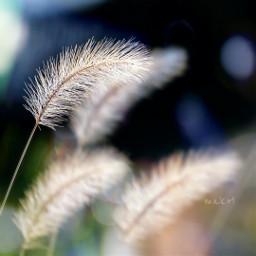 freetoedit bokeh colorful flower love