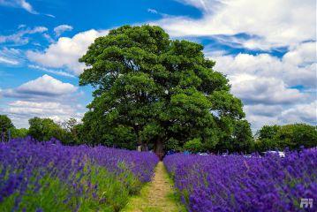 interesting art nature travel london freetoedit