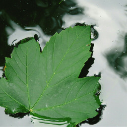 photography nature leaf floatonwater