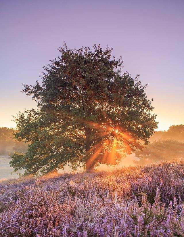 - burning tree -  @nationalgeographic    #landscape #nature #amazing #photography
