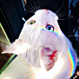 lovecats rainbow blueandgreen summer