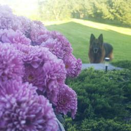 flowers nature naturesbeauty mydog mydogisawesome