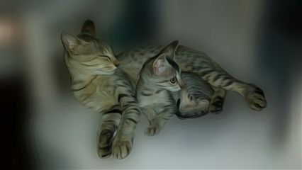 oilpaintingeffect cats catsphotography cat kitten