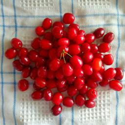 freetoedit berries red myshot noedit