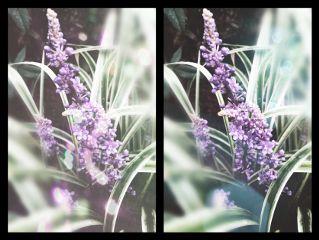 blossom purple bokeh seafoameffect dramaeffect